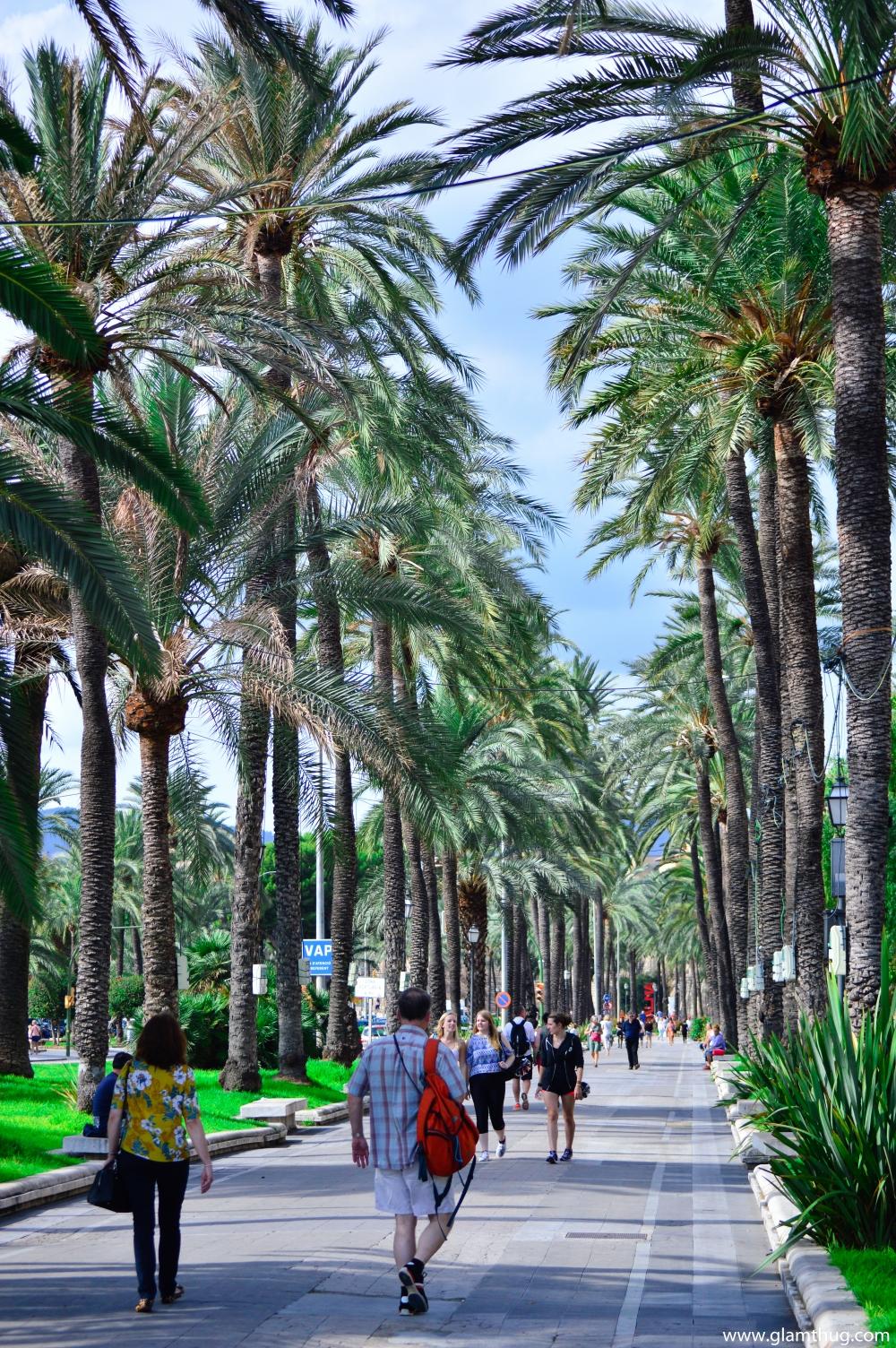 what to do in palma de Mallorca capital of palma de mallorca, discover Palma capital